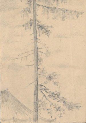Новосельский В Н Палатка у ствола сосны Набросок карандашом 1944 г