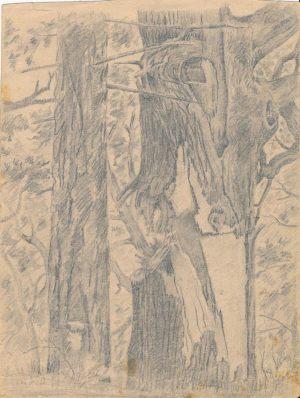 Новосельский В Н Расщепленный снарядом ствол Набросок  карандашом 1944 г