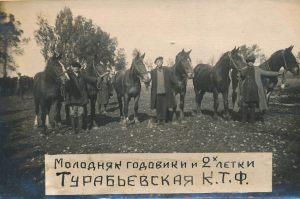 Молодняк годовики и 2х-летки Турабьевская КТФ
